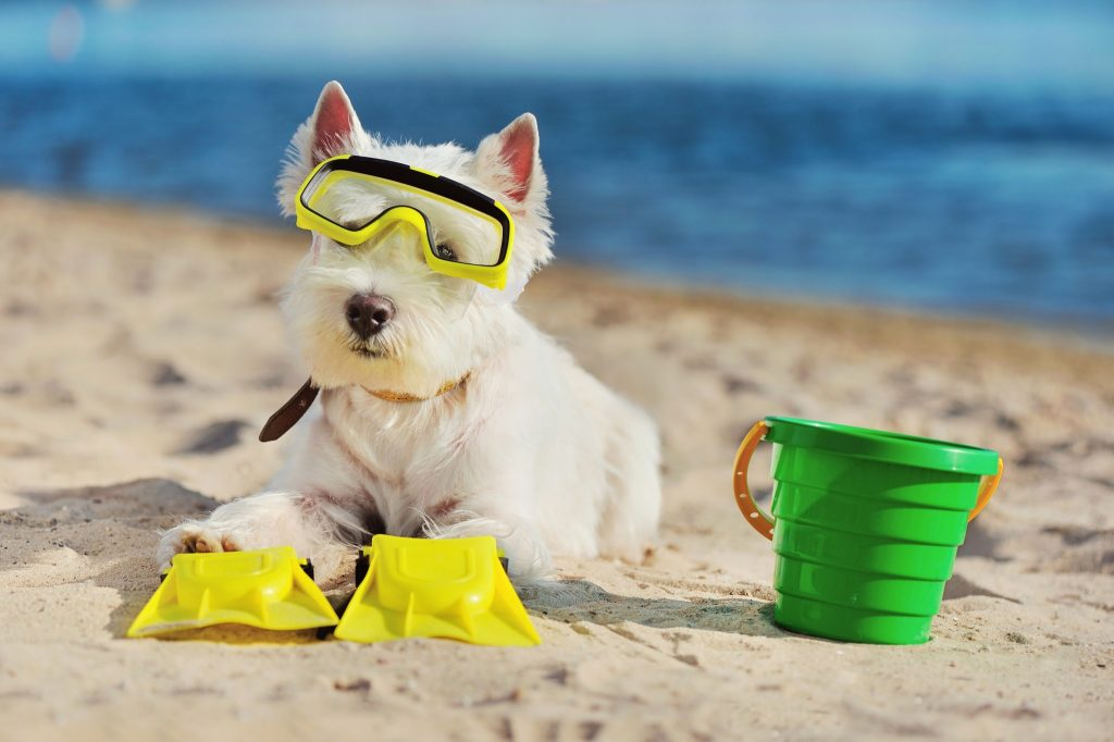 Dog on the beach with goggles and flippers